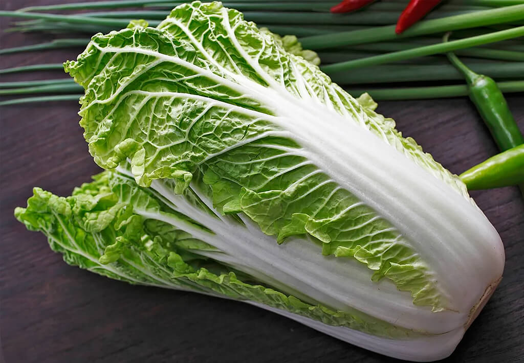 Chinese cabbage, its use, and harm